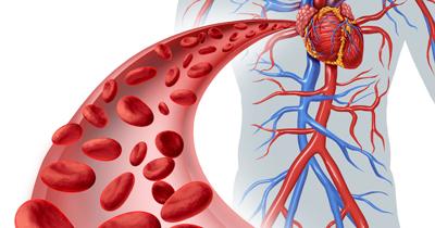 افزایش جریان خون با مصرف منظم ۱۱ ماده غذایی